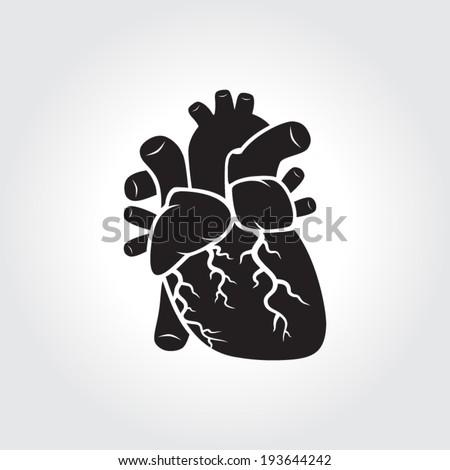 Anatomy of heart - stock vector