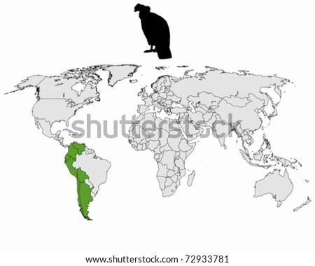 Andean Condor distribution - stock vector