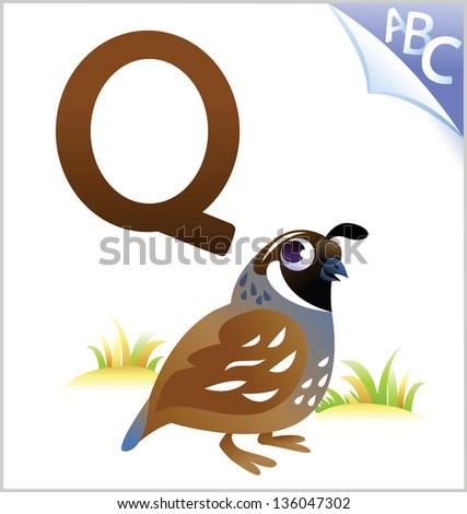 Animal alphabet for the kids: Q for the Quail - stock vector