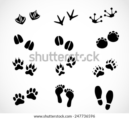 Animal and human paw and footprint set vector - stock vector
