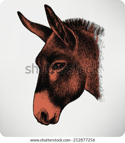 Animal donkey, hand-drawing. Vector illustration. - stock vector