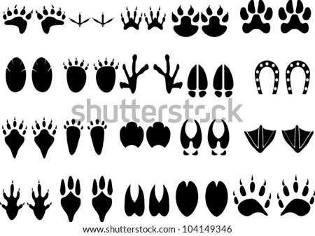 Animal Footprint Vector - stock vector