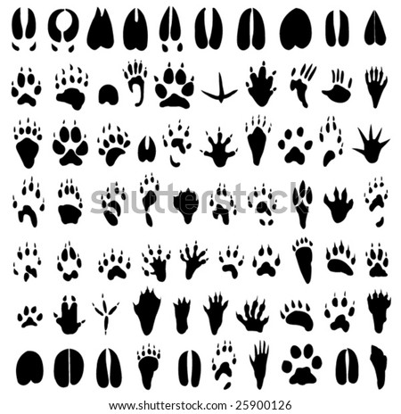 Animal footprints silhouette - stock vector