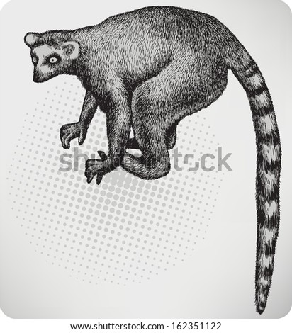 Animal lemur, hand-drawing. Vector illustration.