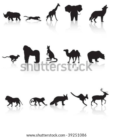 Animal reflections vector - stock vector