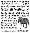 Animal silhouettes - stock vector
