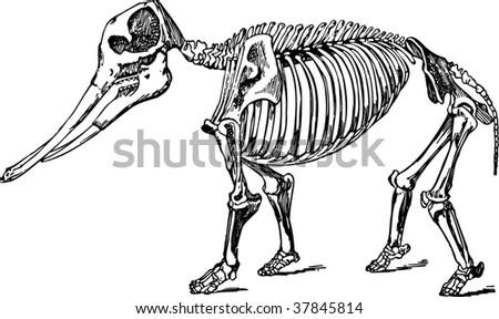 skeletal diagram of a dog skeletal joints on a dog wiring