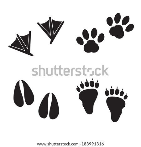Animal trails isolated on white background. VECTOR illustration. - stock vector