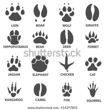 animal trails next name animal animal stock vector