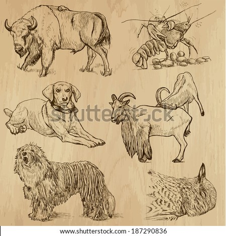 Animals around the World (set no. 10) - Collection of an hand drawn illustrations. Description: Each drawing comprise of two layer of outlines, colored background is isolated. - stock vector