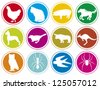 animals icons buttons (animal icons set, animal icons collection, animal buttons, cat, pig, horse, chicken, dog, bird, bull, owl, ant, spider,animal, kangaroo, swallow, pig) - stock vector