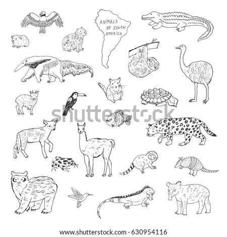 north america animals coloring pages - photo#27