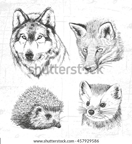 Animals of the forest: the wolf, marten hedgehog and fox. See also other sets of animals. - stock vector