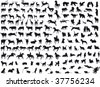 Animals vector - stock vector