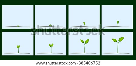 Animation of seed germination on soil, evolution concept - stock vector