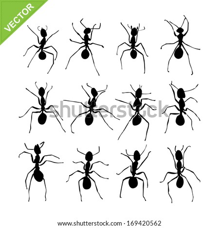 Ant silhouettes vector - stock vector