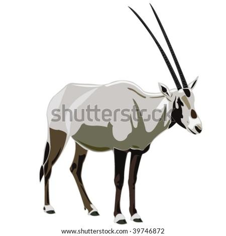 Antelope Series Arabian oryx - stock vector