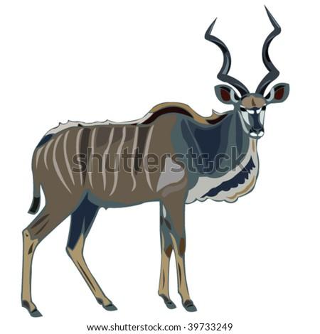 Antelope Series Greater kudu - stock vector