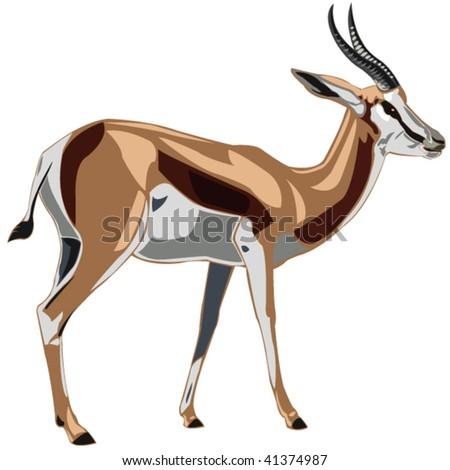 Antelope Series Springbok - stock vector