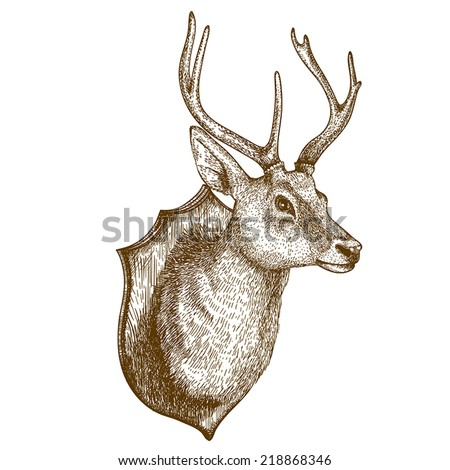 Antique print of a reindeer head isolated on white background - stock vector