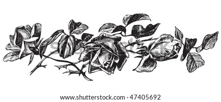 antique roses engraving, scalable and editable vector illustration - stock vector