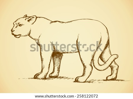 Anxiously powerful pretty young large lioness standing and fierce looking for prey. Vector freehand ink drawn background sketchy in art scribble antiquity style pen on paper with space for text - stock vector