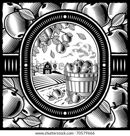 Apple harvest black and white. Vector - stock vector