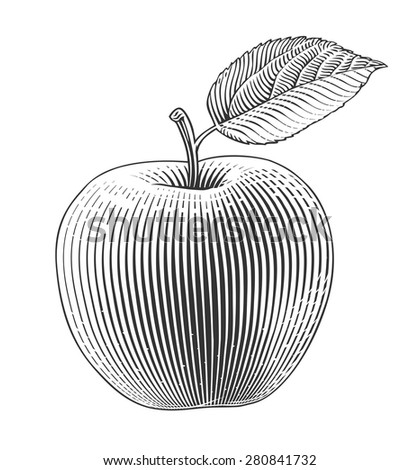 Apple in engraving style. Vector illustration, isolated, grouped, transparent background  - stock vector
