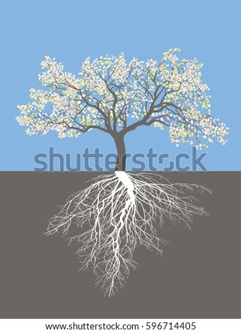 Apple tree in spring with roots