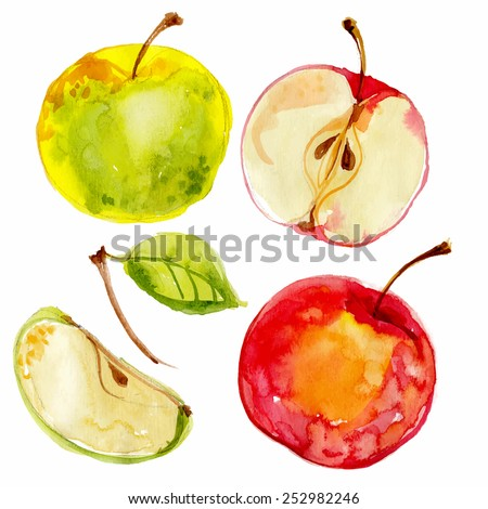 Apples painted with watercolors on white paper. Red apple, green apple, leaf, half an apple. Vector watercolor - stock vector