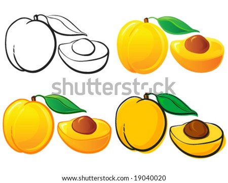 Apricot - stock vector