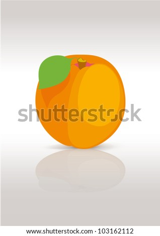 apricot, vector illustration - stock vector