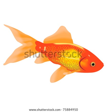 Aquarian a gold fish on a white background