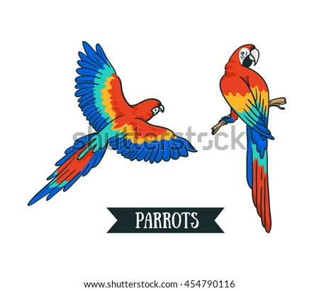 Ara parrot. Isolated vector tropical design element. Tropical birds on the white background. - stock vector