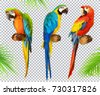 ara parrot. macaw. photo...