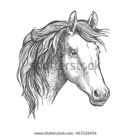 Arabian horse sketch of a head of purebred mare. Horse racing symbol or equestrian sport theme design