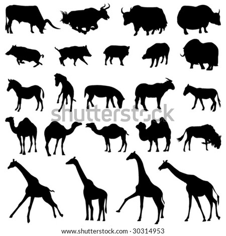Around the world herbivores