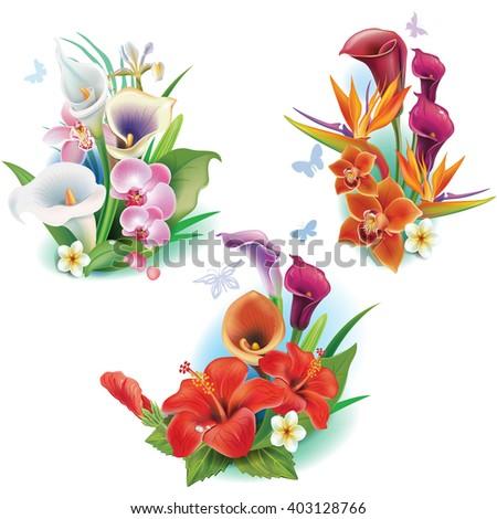 Arrangement from tropical flowers - stock vector
