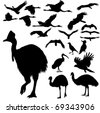 Australian birds vector silhouettes - stock vector