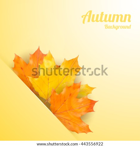Autumn background with realistic maple leaves. Vector back to school banner. Thanksgiving Day greeting card
