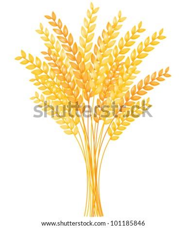 Autumn bouquet of wheat ears. - stock vector
