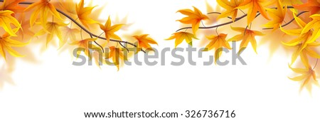 Autumn branches with maple leaves on white background