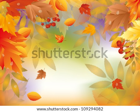 Autumn card with maple leafs. vector illustration