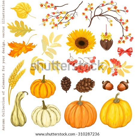 Autumn Collection of elements for your design with pumpkins, sunflower, leaves, cones, acorns, ears, branches of rowan and Oriental Bittersweet, vector illustration. - stock vector