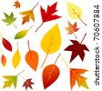 Autumn Leaf Set - Vector EPS10 - stock vector