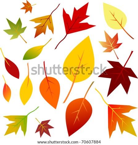 Autumn Leaf Set - Vector EPS10 - stock vector
