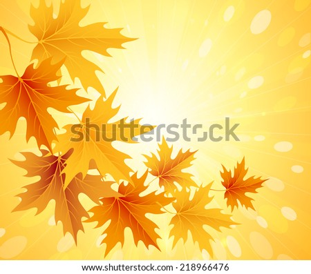 Autumn leaves background. Vector illustration EPS 10 - stock vector