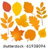 autumn leaves collection - stock vector
