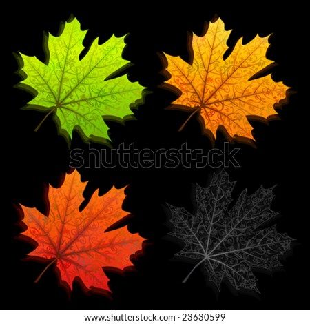 Autumn leaves in four different colors isolated on black