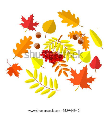 autumn leaves set, isolated on white background. simple cartoon flat style, vector illustration.